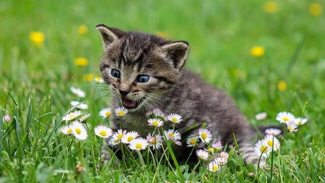 [Erotica] Naughty Kitten