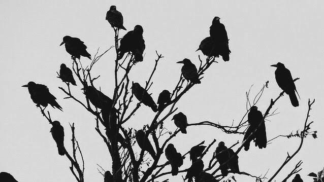 [Erotica] The Crow'sWhore